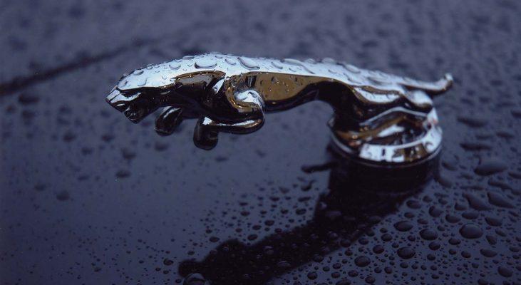 Jaguar-Leaper-bonnet-mascot-Arden